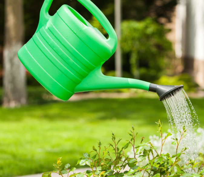 De l'art de bien arroser son jardin l'été